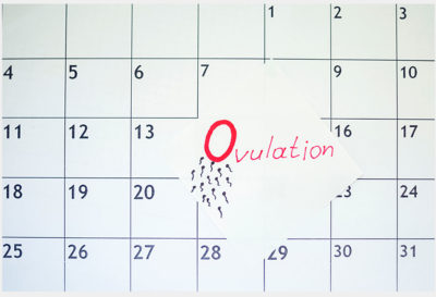 Illustration of Does Ovulation Occur 2 Days / More Than 24 Hours?