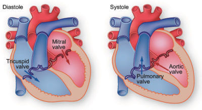 Illustration of Body Condition After Cardiac Ring Installation?
