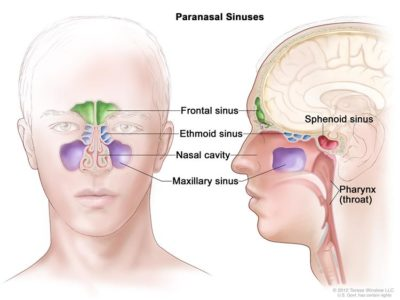 Illustration of Is Paranasal Sinus 3 Dangerous? How Is The Treatment?