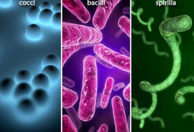 Illustration of Handling Bacterial Infections?