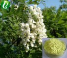 Can Herbal Medicine Containing Sophora Japonica Extract Treat Hemorrhoids?