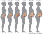 Examination Of Pregnancy At 4 Months Of Age?