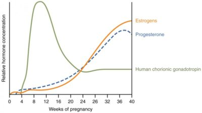 Illustration of Can Progesterone And HCG Be Examined Simultaneously?