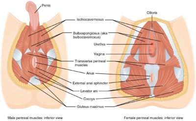 Illustration of The Cause Of The Vagina And Anus Feels Numb, Spasms And Itching?