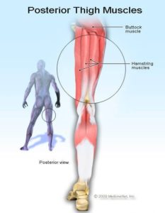 Illustration of Pain In The Buttocks And Hamstrings Such As Bumping Hard Objects?