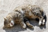 Is It Dangerous To Accidentally Stick Worms From Cats?