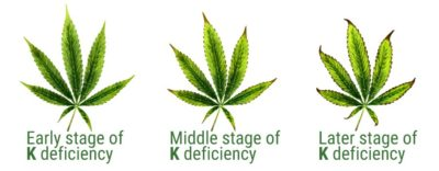 Illustration of How To Treat Potassium Deficiency?