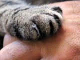 Hand Contaminated With Worms That Are In Cats?