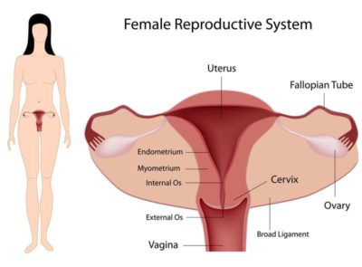 Illustration of Can The Fallopian Tubes Return To Normal After A Uterine Infection?