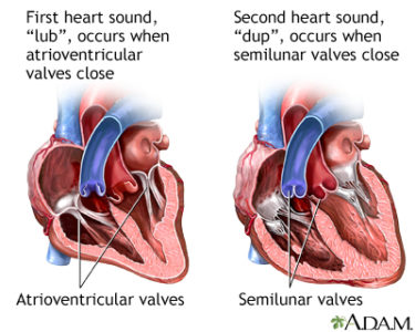 Illustration of The Right Treatment For Heart Palpitations?