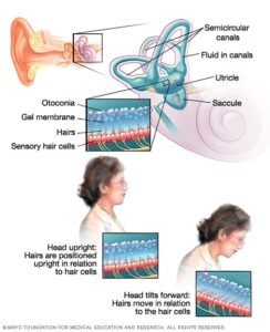 Illustration of The Cause Of Sudden Dizziness, Feels Floating And The Head Feels Pain?