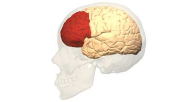 Illustration of Age Limits Of The Prefrontal Cortex (PFC) Brain Can Develop Or Be Improved?