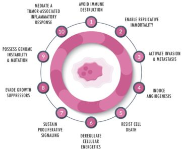 Illustration of Explanation Of The Results Of The Cancer Cell Lab On Adenoma Cells?