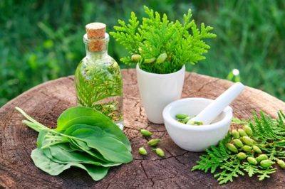 Illustration of Is It Safe To Take Herbal Medicines?