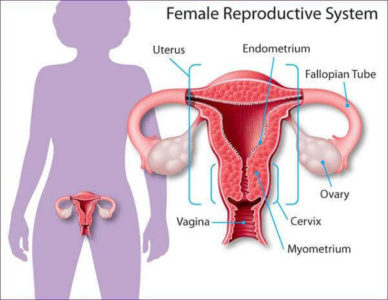 Illustration of Can A Woman Still Menstruate After A Hysterectomy?