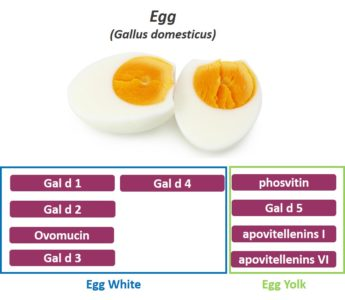 Illustration of How To Deal With Egg Allergy And Cow's Milk In Children?
