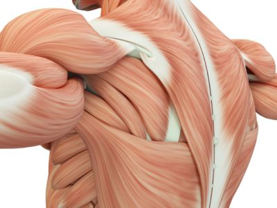 Illustration of Abnormalities In The Joints And Abnormalities In Muscles?