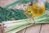 Can Pregnant Women Consume Lemongrass Cooking Water?