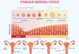 Thickening Of The Egg And Uterine Lining?