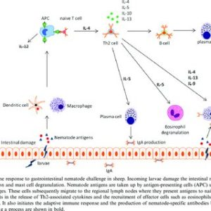 Illustration of Why Is There A Nematode Infection Associated With Immune Expenditure?