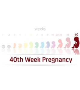 Illustration of A Contraction That Has Not Yet Appeared At 39-40 Weeks' Gestation?
