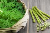 Is The Danger Of Consumption Of Moringa Leaf Powder 1 Teaspoon + Cup Of Water Every Day?