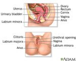 Can A Woman Who Has A Hernia Cause A Clitoris To Come Out?