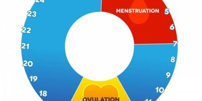Illustration of Causes The Menstrual Cycle To Progress?
