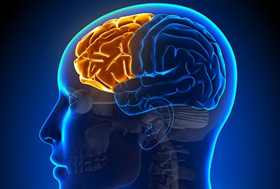 Illustration of PFC (Pre Frontal Cortex) Of The Brain Shrinks Due To Pornography Addiction?