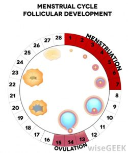 Illustration of Fertile Period And Sperm Survival?