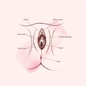 Illustration of Are There Any Hard Parts Of The Vagina?