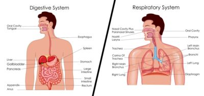 Illustration of Danger Of Choking On Food For The Respiratory Tract?