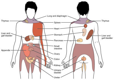 Illustration of Pain Or Discomfort Of The Right Back Of The Body?