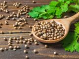 Can You Drink Coriander Cooking Water When You Are Pregnant?