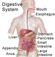 Illustration of Stomach Pain After Appendicitis?
