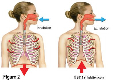 Illustration of The Cause Of Breathing Feels Cramped And Musty?