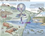 The Impact Of Drinking Water From Animal Carcasses?