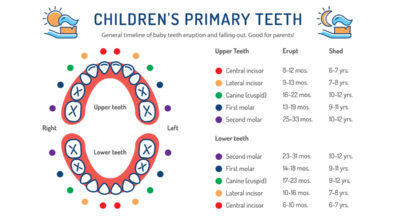 Illustration of How To Differentiate Baby Teeth And Permanent Teeth At The Age Of 14 Years?