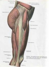 Illustration of Can Stiff Muscles In The Legs Be Flexed?