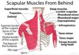 The Cause Of The Neck And Shoulder Pain When Held?