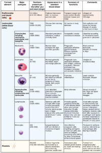 Illustration of Causes Of Decreased Erythrocyte Count?