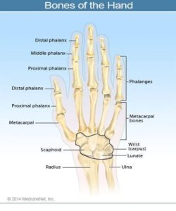 Illustration of Broken Bones And Hand Muscles Are Not As Great?
