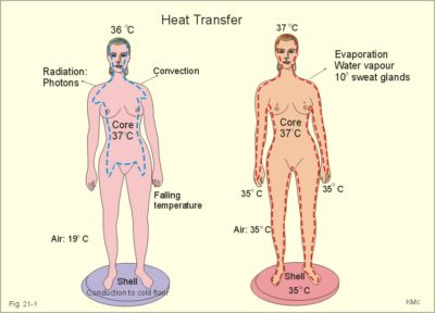 Illustration of Body Heat But Evaporates All The Time?