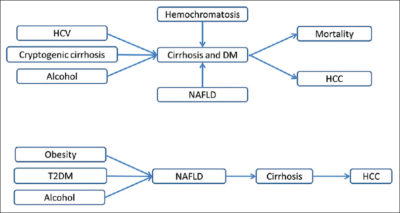 Illustration of Relationship Between Type 2 DM And Liver Cirrhosis.?