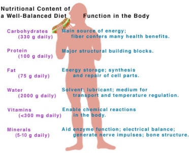 Illustration of How Many Vitamins And Minerals Does The Body Need In A Day?