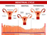 Use Of Supplements To Prepare For Pregnancy During Menstruation?