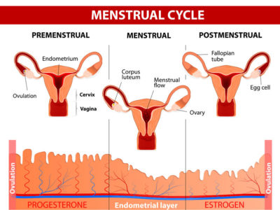 Illustration of Use Of Supplements To Prepare For Pregnancy During Menstruation?