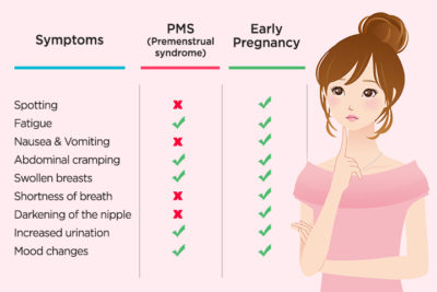 Illustration of Signs Of Menstruation And Pregnancy.?