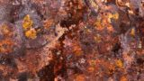 Is Iron Rust Deadly?