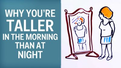 Illustration of Causes Of Height Change In The Morning And Afternoon?
